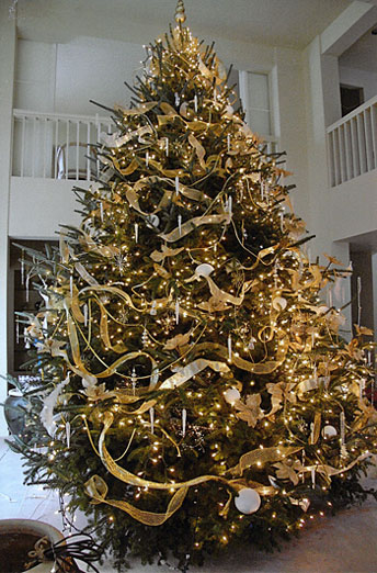 12 foot fraser fir - 12 Foot Christmas Tree