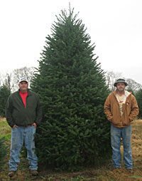 bed2d83e2bc Dan and Bryan Christmas trees was formerly Sundback Trees