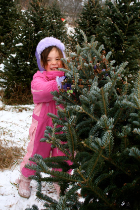 Select a beautiful Dan and Bryan's Christmas tree from any of our lots in Maryland, Washington D.C. and West Virginia.