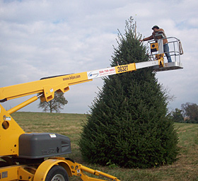 Beautiful, locally grown, fresh Christmas Trees from Dan and Bryans, sold in Maryland, West Virginia, and Washington D.C.
